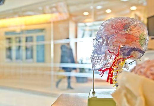 脳の働きのついて